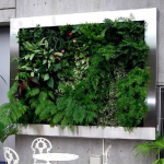 Latest Trends in Landscaping: Part 1